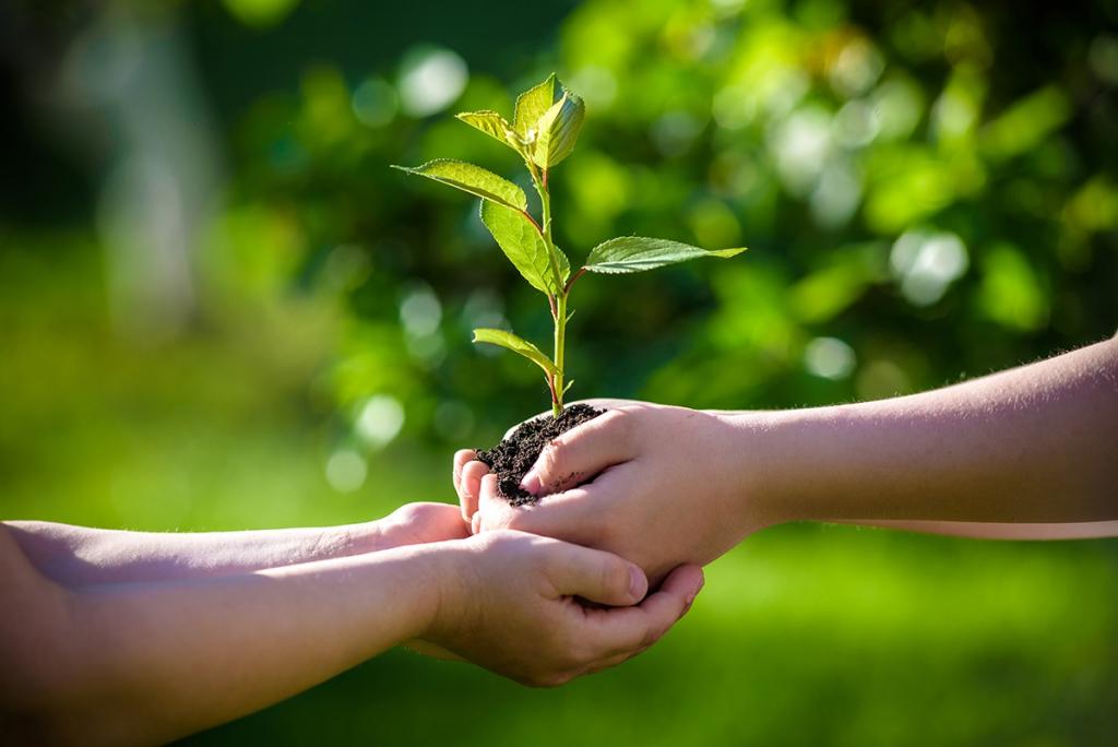 小さな木の苗を自然に還すイメージ