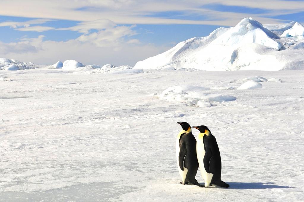 氷河にたたずむ2羽のペンギン